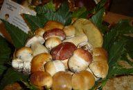 cestino-funghi-autunno-2004