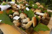 Mercato dei Funghi di Giaveno
